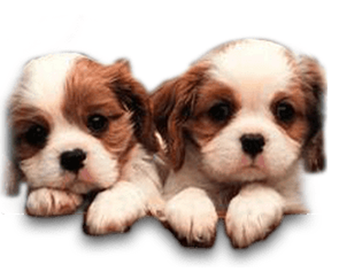Pups 4 Love Cute Puppies